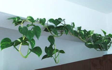 futó szobanövények